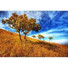 Wandaufkleber deko : bäume 1446