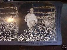 Keystone stereoview card japan silk worm factory