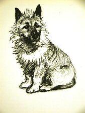 Cecil Aldin Border Terrier Looks like Australian Ter. 1939 Vintage Print Matted