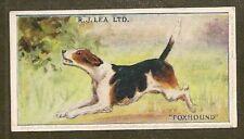 Rare 1923 Uk Dog Art Full Body Rj Lea Chairman Cigarette Card English Foxhound
