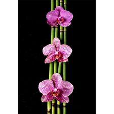 Stickers muraux déco : bambou orchidée 1322