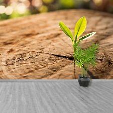 Photo sur papier peint Préencollé Amovible Réutilisable Pousse Vert
