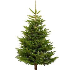 Nordmann Fir Fresh Cut Christmas Tree - Real Live Fresh Seasonal Xmas Tree