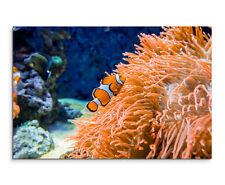 Wandbild Naturfotografie Clownfisch unter Wasser vor Anemone auf Leinwand