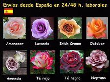 Semillas de rosas disponibles en 8 tonos diferentes (10-20 ó 30 semillas)