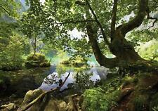 Fototapete Tapete Wandbild Vlies 1D20151272 High Quality Wald