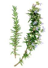 Rosemary 100% Pure Essential Oil 10ml, 25ml, 50ml, 100ml, 500ml, 1litre