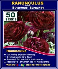 FLOWER SEEDS - RANUNCULUS  Poppy SEEDS- BURGUNDY - 50x SEEDS