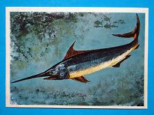 Figurina Panini-ANIMALI DI TUTTO IL MONDO 1965-n.276-PESCESPADA-rec