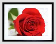 Marco Negro Rojo Rosa Flor Bloom montaje de imagen de impresión arte enmarcado B12X9504