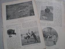 Photo article Norwalk Los Angeles Cawston Ostrich Farm 1899 USA