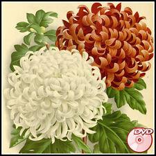 L'Illustration Horticole - Vol. XXII-XLIII -Linden - Flowers Herbs etc - 3 DVD's