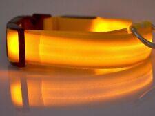 collier  chien lumineux dog collar light  leucht Hundehalsband collar de perro