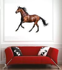 Affiche poster décoration murale Cheval réf 21977704 (6 dimensions)