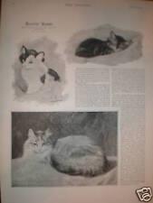 Henriette Ronner cat artist prints article 1891