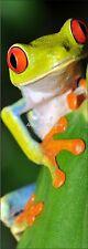 Affiche poster de porte déco trompe l'oeil Grenouille réf 605 (4 dimensions)