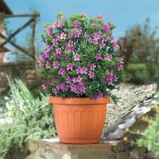 Vaso Giardino Terra Plastica Bama Resistente Piante e Fiori Terrazzo Balcone
