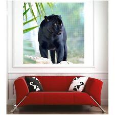 poster poster leopardo 66589162 Art déco Adesivi