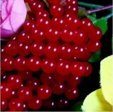 "8mm  Red Round Loose Beads Gemstone 15"""