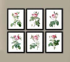 Redoute Roses Pink Rose Wall Art set of 6 unframed Botanical Art Prints