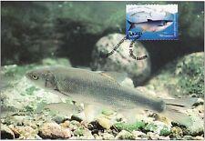 Angeln Fisch Karpfen Aspius Aspius Finnland Maxi FDC 2001