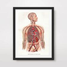 VINTAGE COLOUR HUMAN ANATOMY ART PRINT Poster Decor Wall Chart Illustration