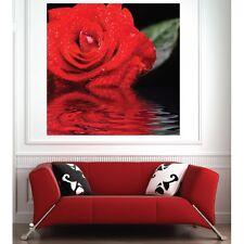 Affiche poster Rose 2029789