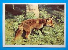 Figurina Panini-ANIMALI DI TUTTO IL MONDO 1965-n.90-VOLPE-rec
