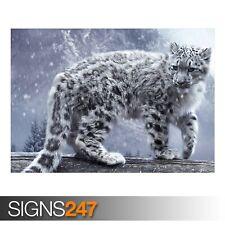 Leopardato Bianco (3379) Animale POSTER-Foto Poster Arte Stampa A0 A1 A2 A3 A4