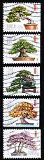 #4618 - 4622  Bonsai Trees set/5 - Used