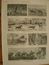 Notes in Queensland Australia 1881 prints