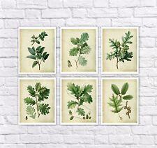 Vintage Botanical Print set of 6 unframed wall art Oak Leaves symbol of strength