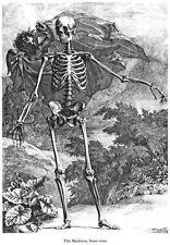 ML37 Vintage Medical Anatomy Illustration Skeleton Front Albinus Poster A2/A3/A4