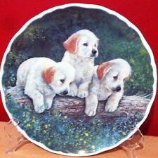 Royal Albert/England Porcelain/Bone China/Golden Labradors/ Plate