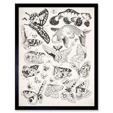 FELIX BRACQUEMOND ALBERT DE BALLEROY FRENCH HARE OLD ART PAINTING POSTER BB5394A