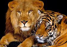 Lion Tigre Drôle Chat Sauvage Amusant Animal Douce Mignon Neuf Affiche A3 A4
