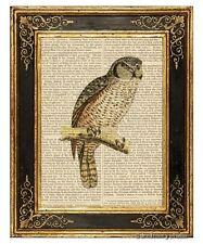 Owl #3 Art Print on Antique Book Page Vintage Illustration Nocturnal Wise Birds