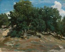 "Camille Corot : ""Fontainebleau: Oak Trees a Bas-Breau"" — Fine Art Print"