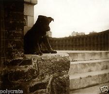 "Tirage repro photo ancienne -  Chien beauceron ""chiot de Strasbourg"""