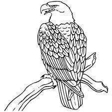 Sticker Décor XXL Oiseau Aigle sur sa branche, 30x28 cm à 60x57 cm (OIS012)