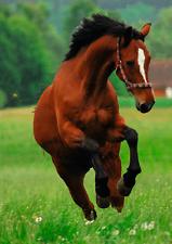 FRISKY HORSE - 3D Lenticular Animal Post Card - Greeting Card