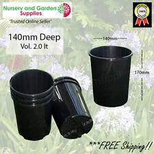 140mm DEEP Plant Pot various qtys - Avocados, Macadamia, Citrus, Palms, Natives