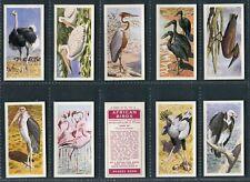 "BROOKE BOND RHODESIAN 1965 ""AFRICAN BIRDS"" PICK YOUR CARD"