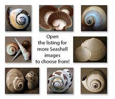 Seashells Fine Art Prints, Ben and Raisa Gertsberg