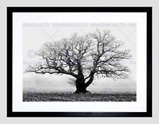 OLD OAK TREE BLACK WHITE MIST FOG BLACK FRAME FRAMED ART PRINT PICTURE B12X9685