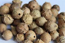 Majuphal Manjakani Quercus Infectoria Nutgalls Gallnuts Oakgalls Majuphal Mayaph