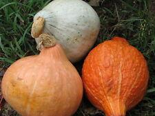 Squash Seed: Hubbard Squash mixture Seeds Fresh Seed  FREE Shipping
