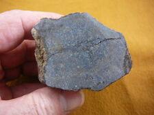 (DF476-19) Fossil REAL DINOSAUR leg Bone piece Jurassic I love dinosaurs bones