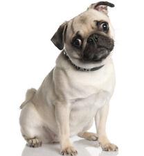 Pug Cachorro Perro Adhesivo Para Uso Interior O Exterior Pared Van Car