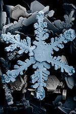 Poster, Many Sizes; Snowflake Through Electron Microscope P2